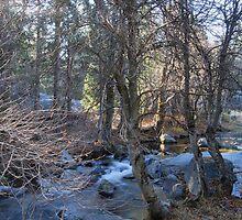 Big Creek Fish Camp, Ca by Mark  Christensen