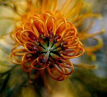 Grevillea - Australian Native by Colin Leal