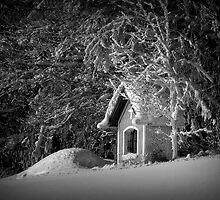 Say hello to winter by Kurt  Tutschek