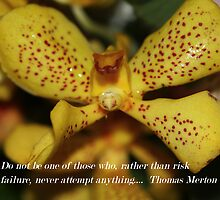 Thomas Merton Quote by ZeeZeeshots