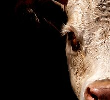 Half Cow by stackerzling