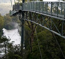 Tahune Forest Airwalk, Tasmania by Rachel Ward