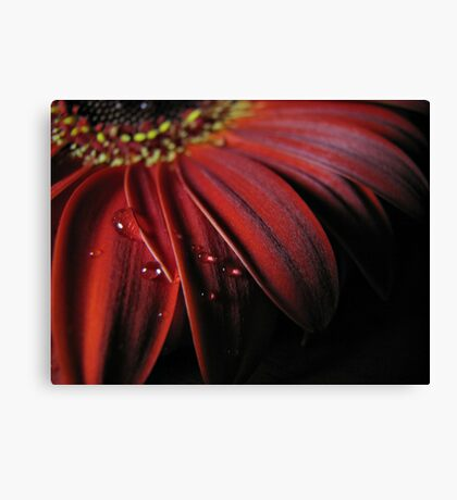 ~ the colour of my love ~ Canvas Print