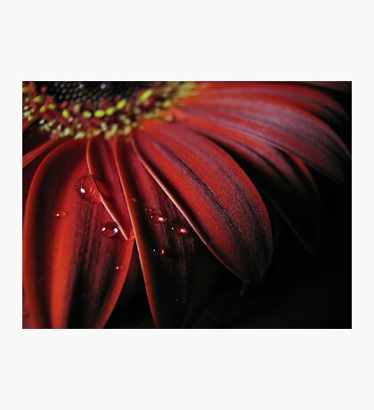 ~ the colour of my love ~ Photographic Print