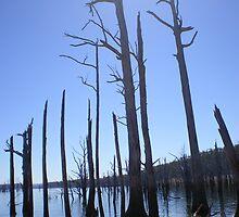 Lake Echo, Tasmania by Rachel Ward