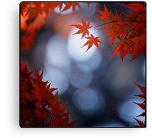 Autumn colours; Yoyogi Park, Tokyo, Japan Canvas Print