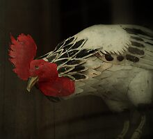 _ little red rooster _ by Louise LeGresley