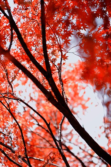 Looking up into another world; Yoyogi Park, Tokyo, Japan by Alfie Goodrich