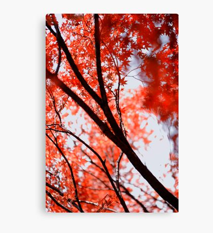 Looking up into another world; Yoyogi Park, Tokyo, Japan Canvas Print