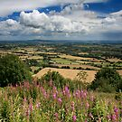 Malvern Hills: July by Angie Latham