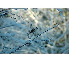 Winter Dreams Photographic Print