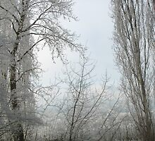 winter curtains by Bruce  Dickson