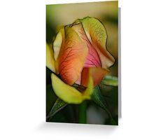 Pastel Rose Greeting Card