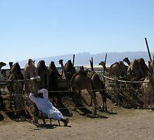 Camel Markets, Al Ain by John Douglas