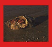 Hermit Crab on Fahan Beach Kids Clothes