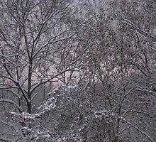 snows here  by melynda blosser