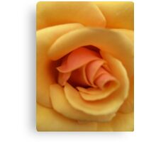 Roses are not always Red! Canvas Print