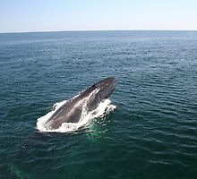 A Whale of a Tale!  Part 2, please read in order! by Linda Jackson