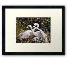 Egrets Build Nest Framed Print