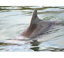 Dolphin from the Deep Photographic Print