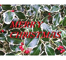 Merry Christmas Holly and Berries Card Photographic Print