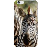 FOUR EYES WATCHING - BURCHELL'S ZEBRA – Equus burchelli – Bontkwagga iPhone Case/Skin