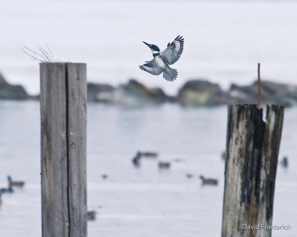 An Elusive Bird by David Friederich