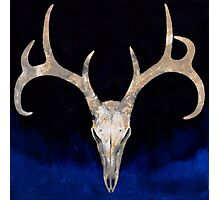 Deer Skull Photographic Print