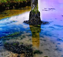 Aldeburgh Wetland 5. by Wayne Bradshaw