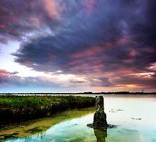 Aldeburgh Wetland 4. by Wayne Bradshaw