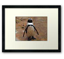 Baby Penguin Framed Print