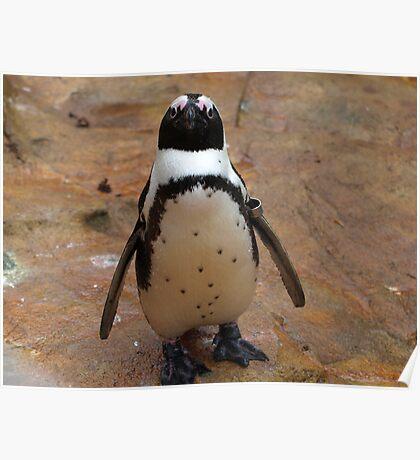 Baby Penguin Poster
