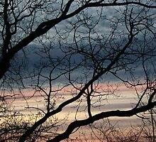 Dead tree at sunset by forgetfulart