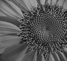 Sunflower Macro in B&W by KSkinner