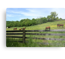 Springtime in a Peaceful Pasture Metal Print