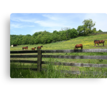 Springtime in a Peaceful Pasture Canvas Print
