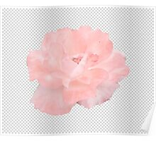 Photoshop Flower Poster