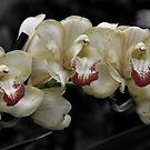 Cymbidium  yellow orchid by Matsumoto