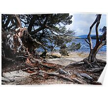 Decaying Wood, Dove Lake Poster