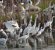 Egrets and Reeds by Charlie Sawyer
