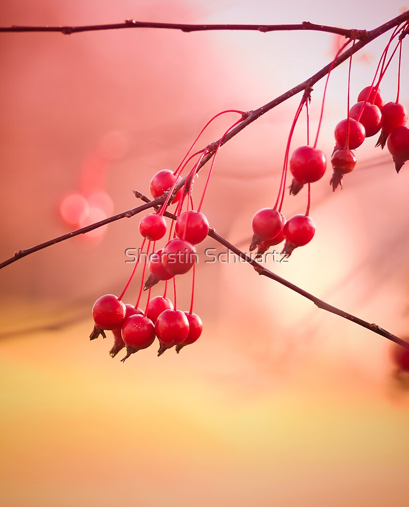 Magic Berries... by Sherstin Schwartz