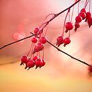 Magic Berries... by Sherstin Schwartz