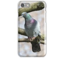 pigeon on tree iPhone Case/Skin