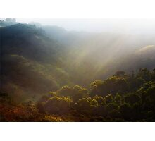 Forest Valley Photographic Print