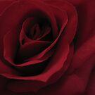 Red Rose by Tamara Brandy