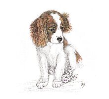 King Charles Puppy Photographic Print