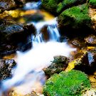 Bush Stream by Stephen Johns