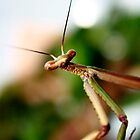 Praymantis by Anita Ciancio