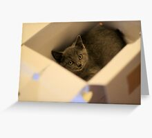 Donut in a box Greeting Card