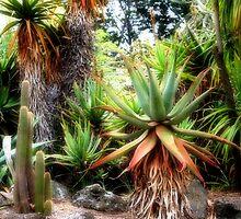 Cactus Garden by Selina Tour
